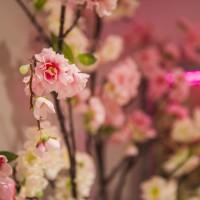 Beauty Rose - Schoonheidssalon in Eindhoven